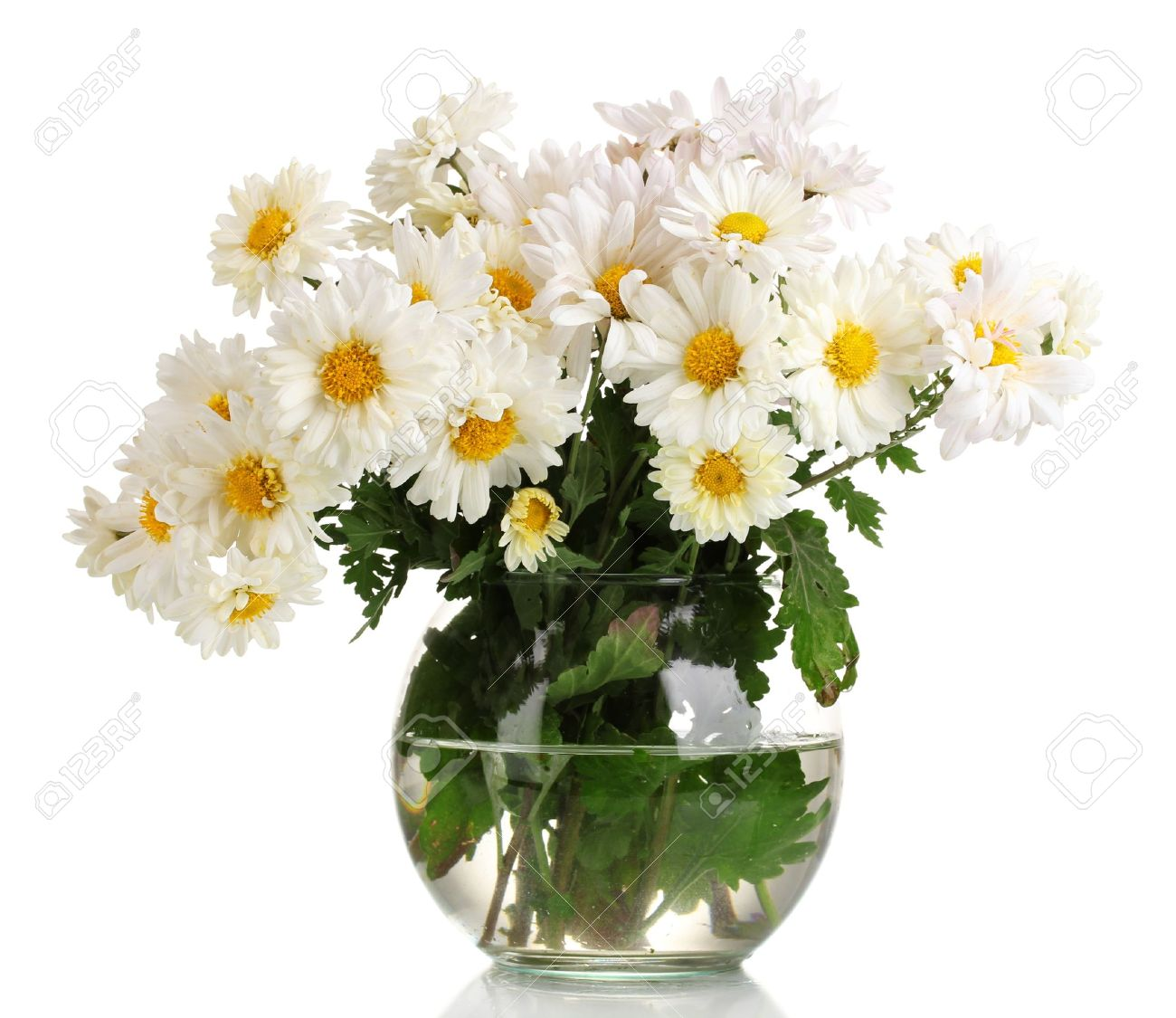 Beautiful bouquet of daisies in vase isolated on white stock photo beautiful bouquet of daisies in vase isolated on white stock photo 11193075 reviewsmspy