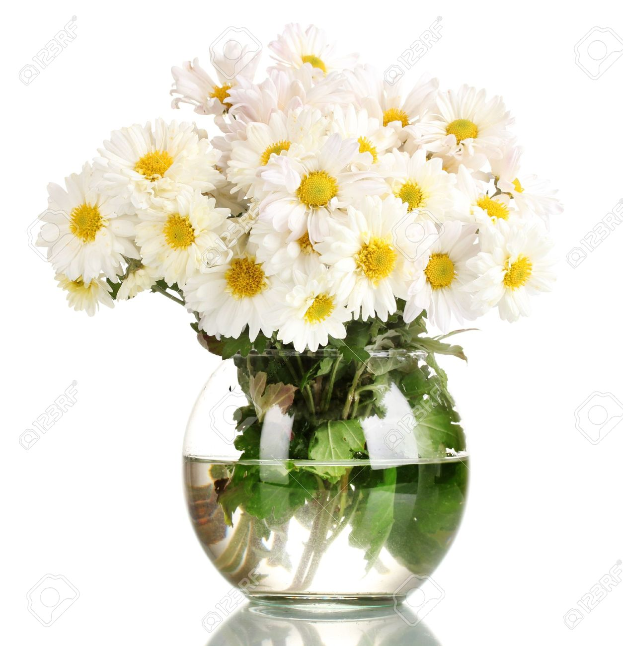 Beautiful bouquet of daisies in vase isolated on white stock photo beautiful bouquet of daisies in vase isolated on white stock photo 11288227 reviewsmspy
