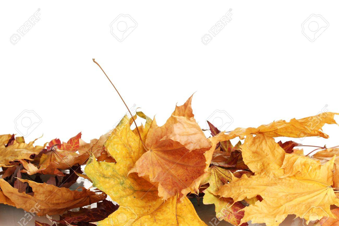 dry autumn leaves isolated on white Stock Photo - 11725848