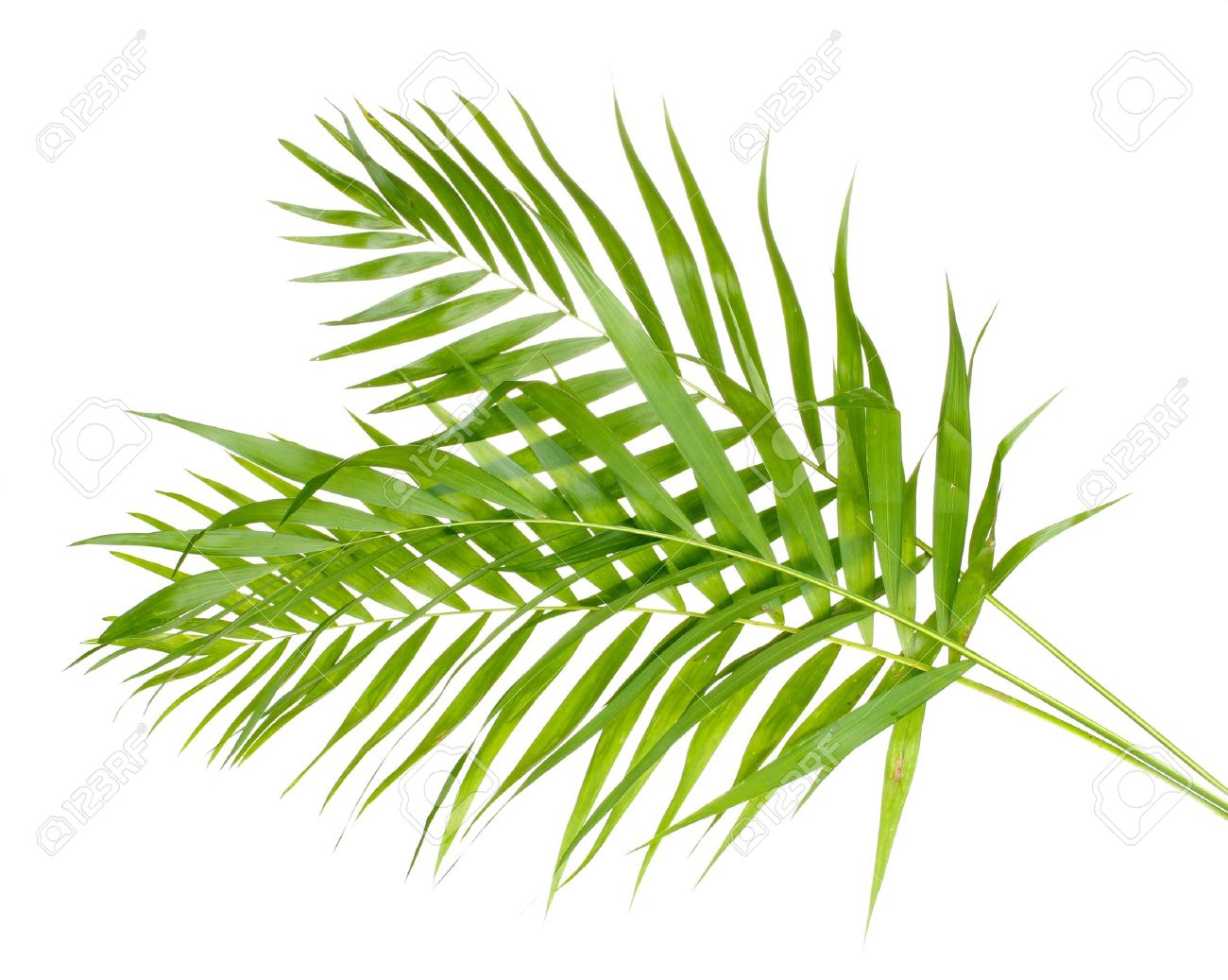 palm tree detail stock photos u0026 pictures royalty free palm tree