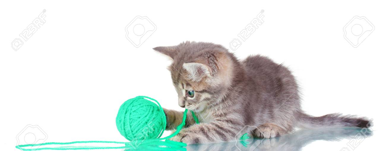 Funny gray kitten and ball of thread isolated on white Stock Photo - 12133361