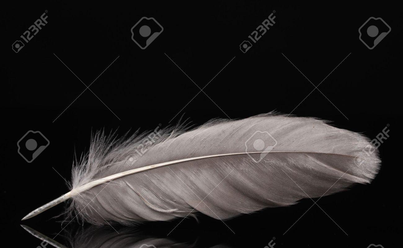 beautiful feather on black background Stock Photo - 12310505