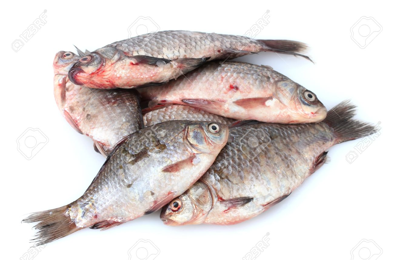 Fresh fishes isolated on white Stock Photo - 12564392