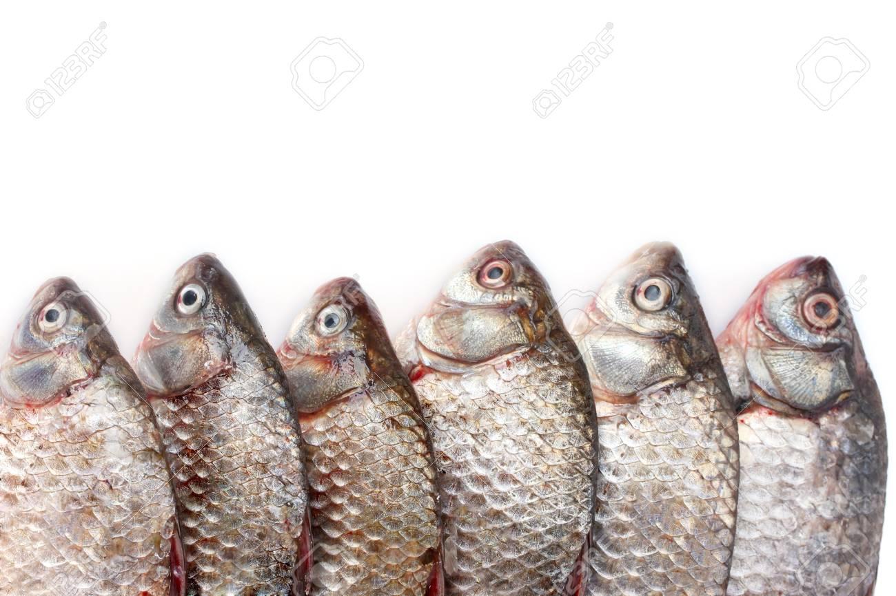 Fresh fishes isolated on white Stock Photo - 12665802