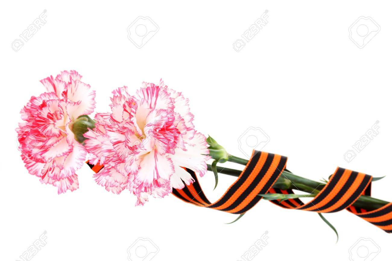 carnations and St. George's ribbon isolated on white Stock Photo - 13268038