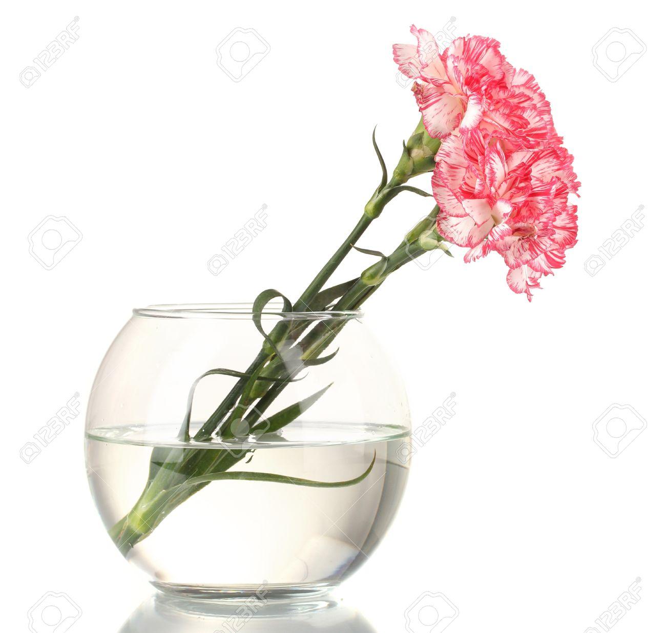 Beautiful carnations transparent vase isolated on white Stock Photo - 13435053
