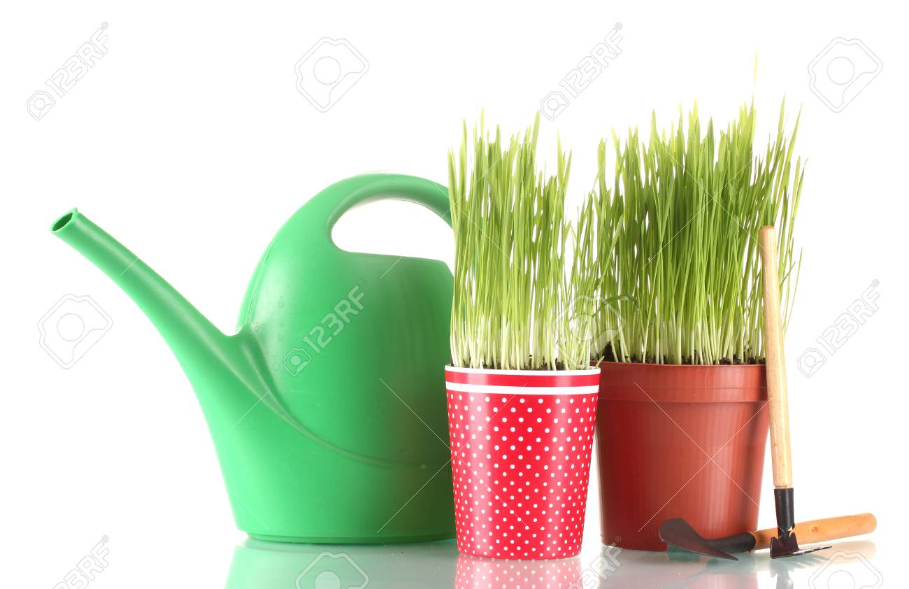 Green grass in two flowerpot isolated on white Stock Photo - 13435429