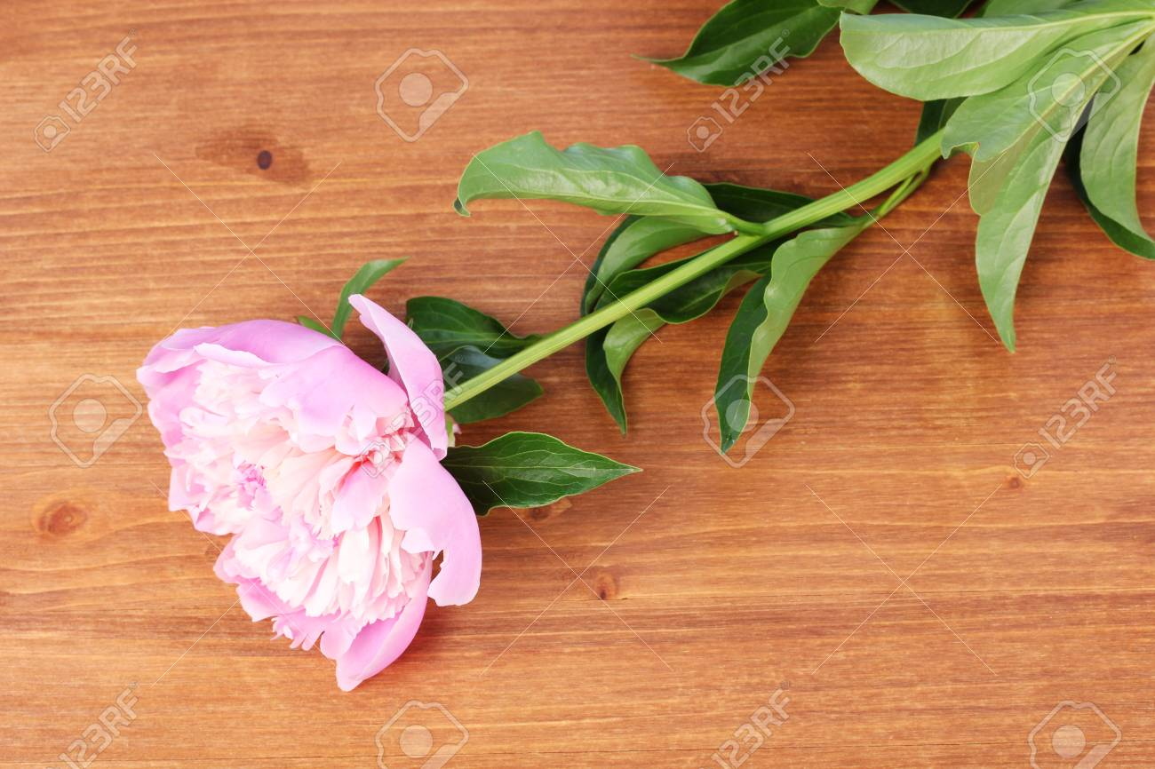 Pink peony on wooden background Stock Photo - 13667098