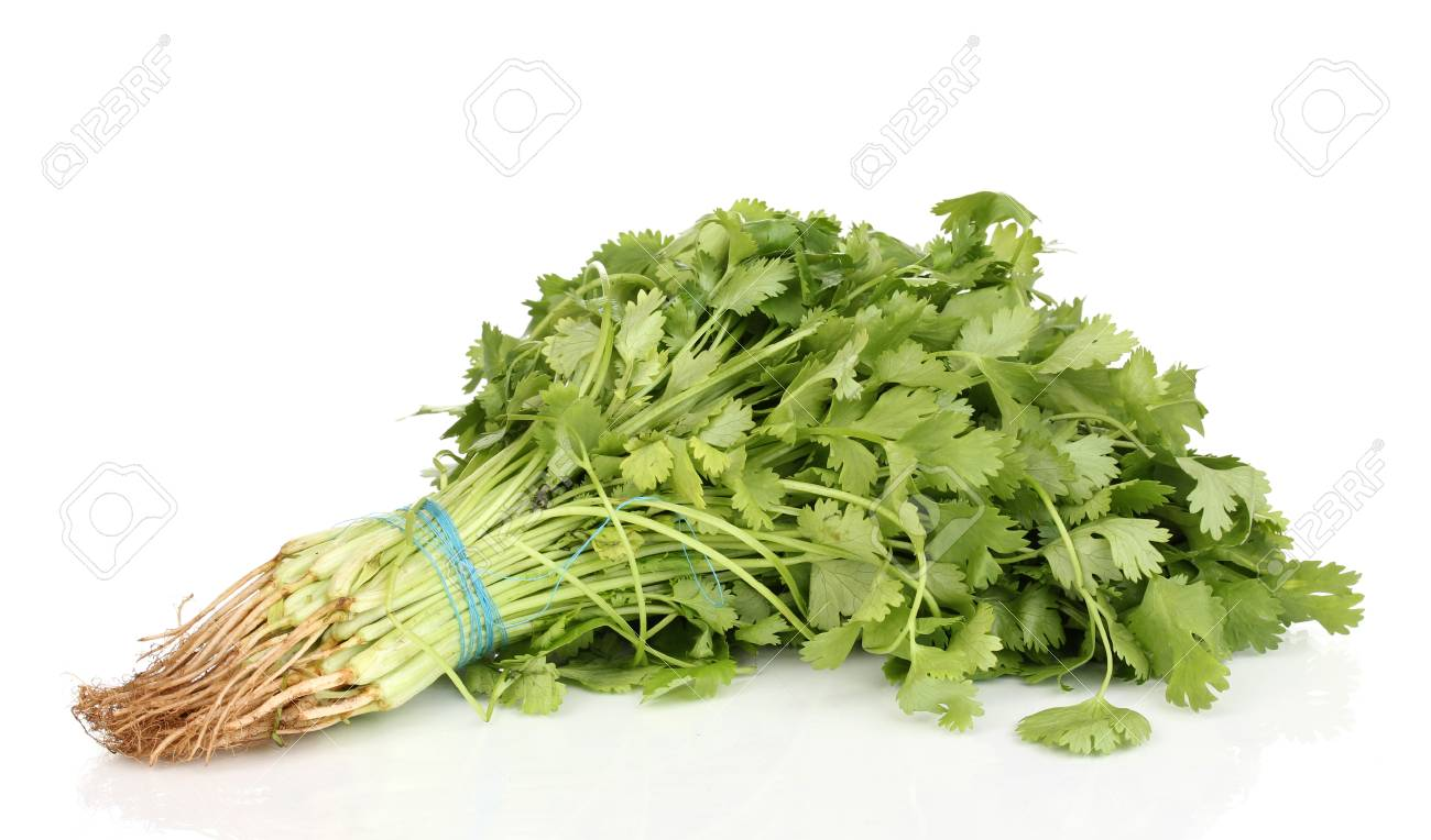 fresh coriander or cilantro isolated on white Stock Photo - 13792094
