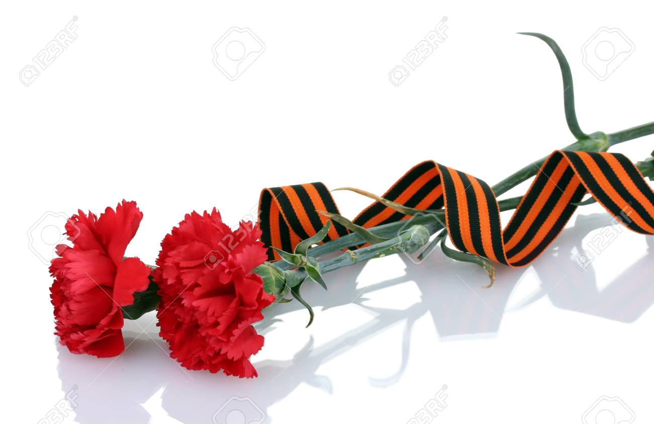 carnations and St. George's ribbon isolated on white Stock Photo - 14064900