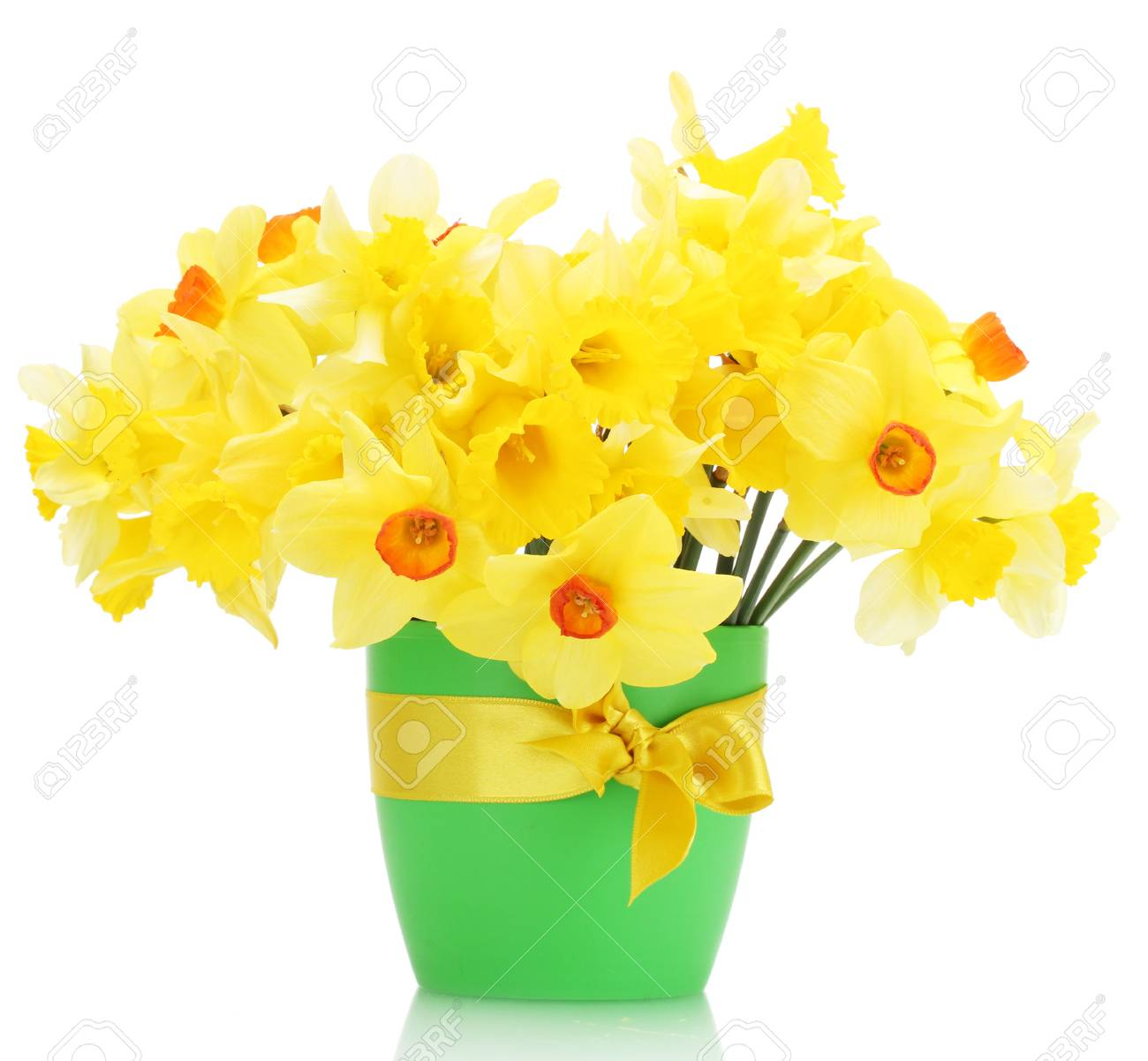Beautiful Yellow Daffodils In Flowerpot Isolated On White Stock