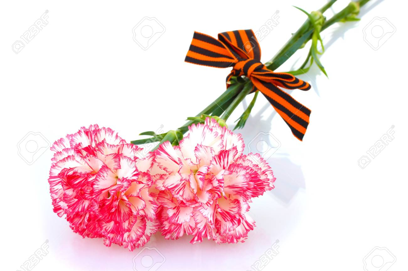 carnations and St. George's ribbon isolated on white Stock Photo - 14077629