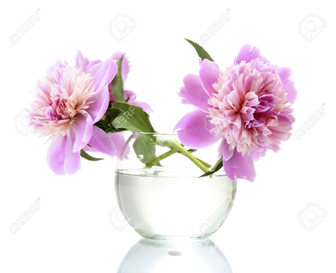 Pink peonies flowers in vase isolated on white royalty free stok pink peonies flowers in vase isolated on white stok fotoraf 14224608 mightylinksfo