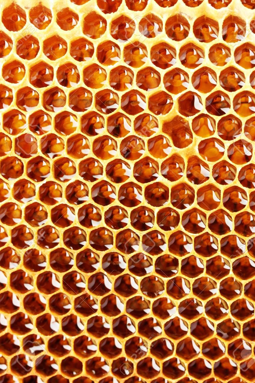 yellow beautiful honeycomb with honey, background Stock Photo - 14540007