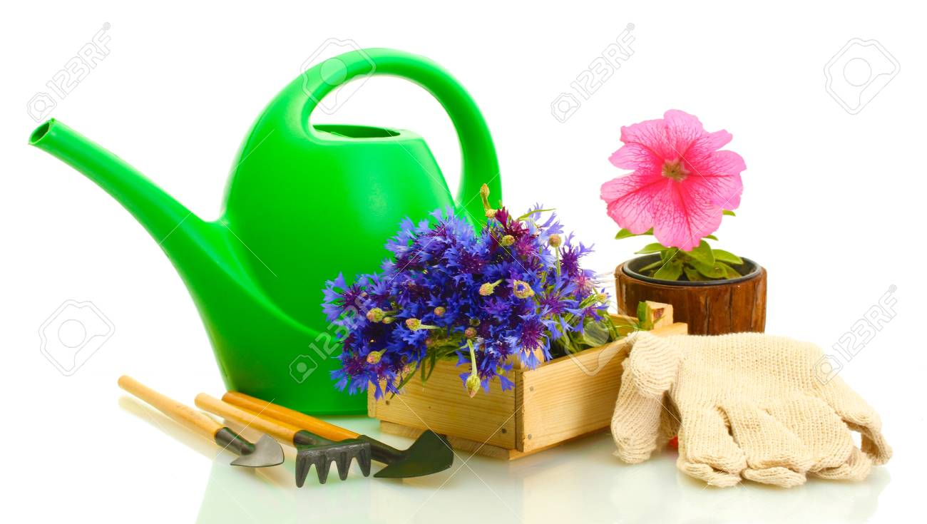 watering can, tools and flowers isolated on white Stock Photo - 14742308