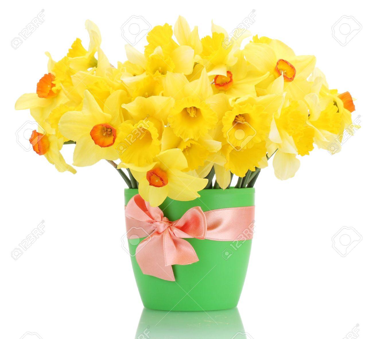Banque d\u0027images , belles jonquilles jaunes dans pot de fleurs isolé sur  fond blanc