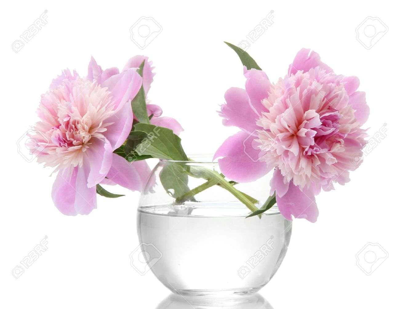 Pink peonies flowers in vase isolated on white stock photo pink peonies flowers in vase isolated on white stock photo 14775833 reviewsmspy