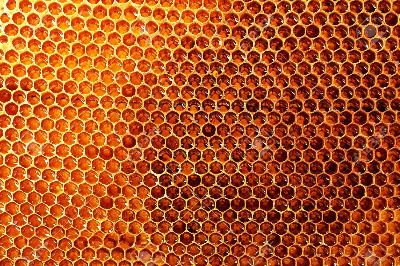 yellow beautiful honeycomb with honey, background Stock Photo - 14795642