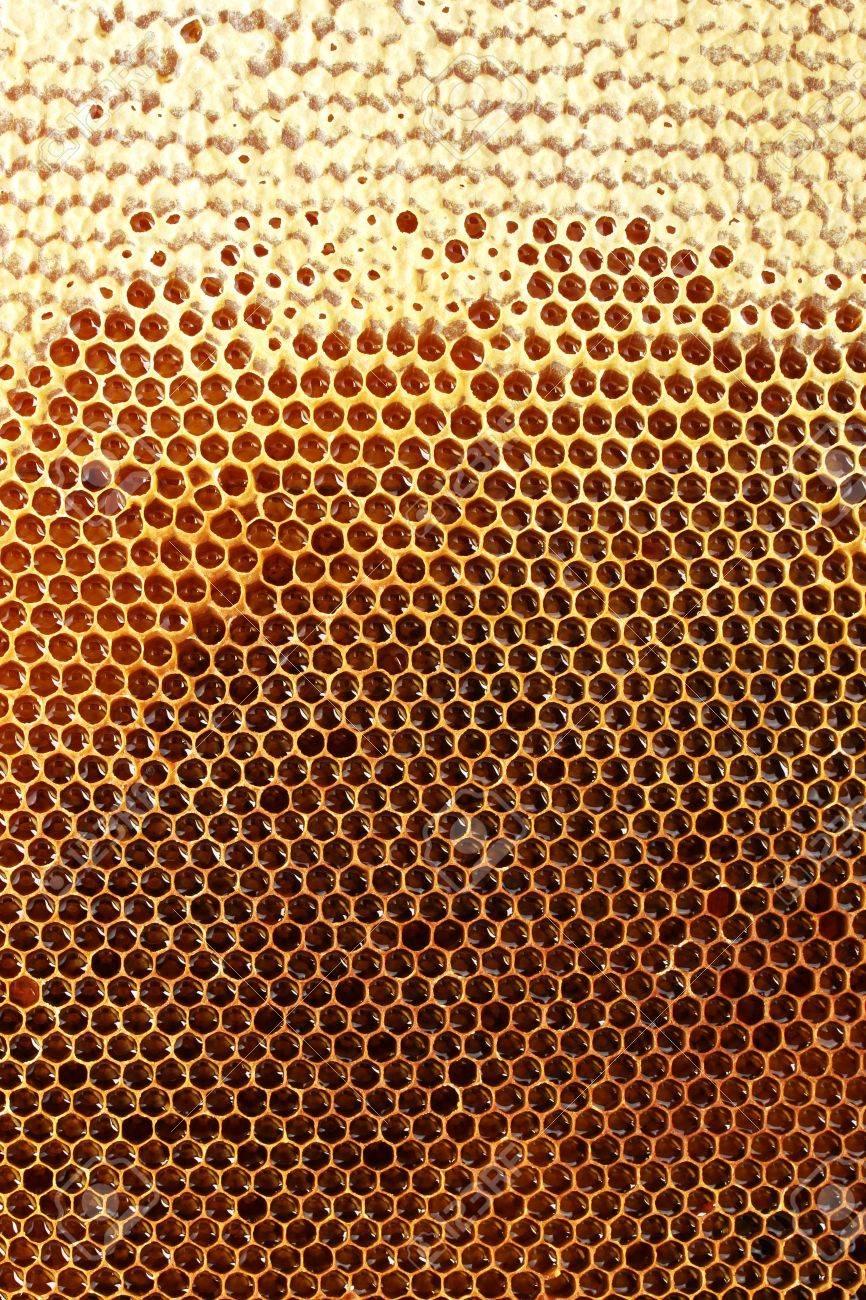yellow beautiful honeycomb with honey, background Stock Photo - 14865907