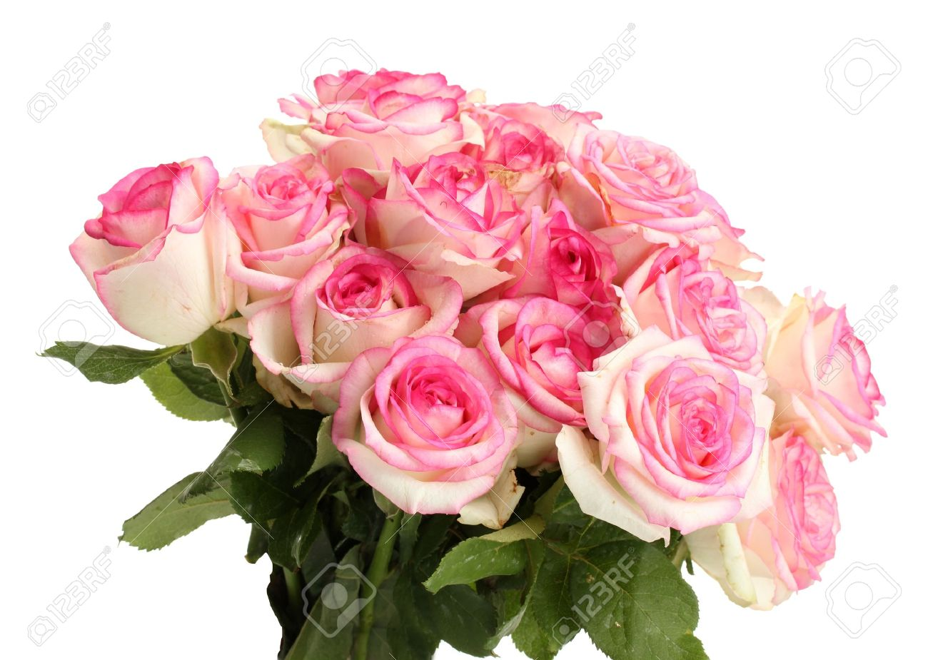 Beautiful bouquet of pink roses isolated on white stock photo beautiful bouquet of pink roses isolated on white stock photo 14917642 mightylinksfo