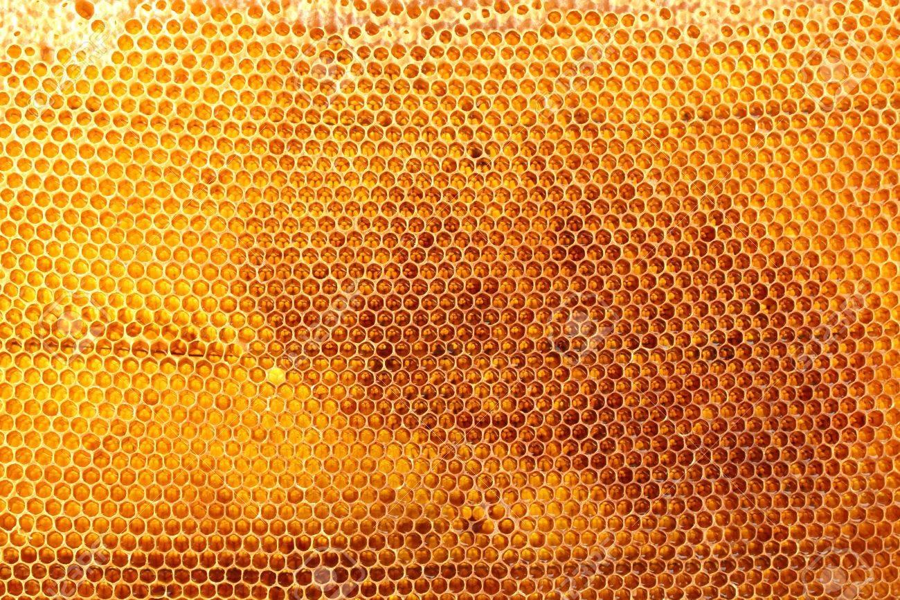 yellow beautiful honeycomb with honey, background Stock Photo - 15104605