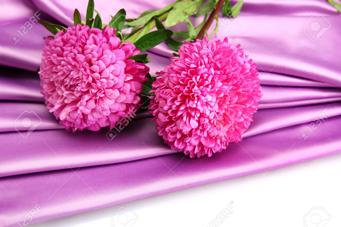 beautiful aster flowers, on silk background stock photo, picture, Beautiful flower