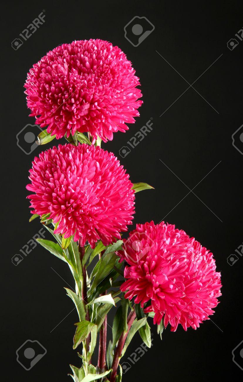 Banque dimages , aster fleurs magnifiques, sur fond noir