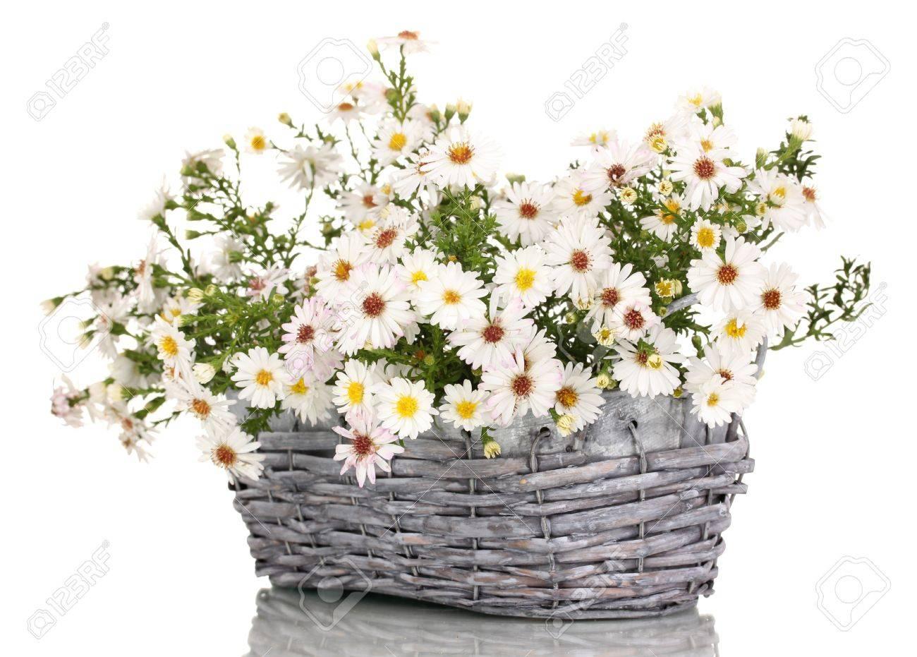 Beautiful bouquet of white flowers in basket isolated on white stock beautiful bouquet of white flowers in basket isolated on white stock photo 15457627 mightylinksfo