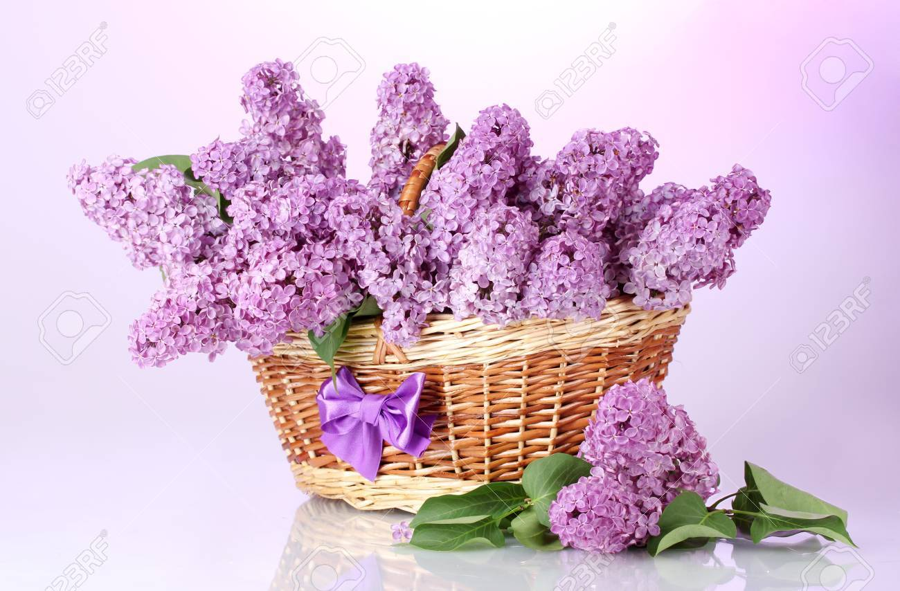 beautiful lilac flowers in basket on purple background Stock Photo - 15458929