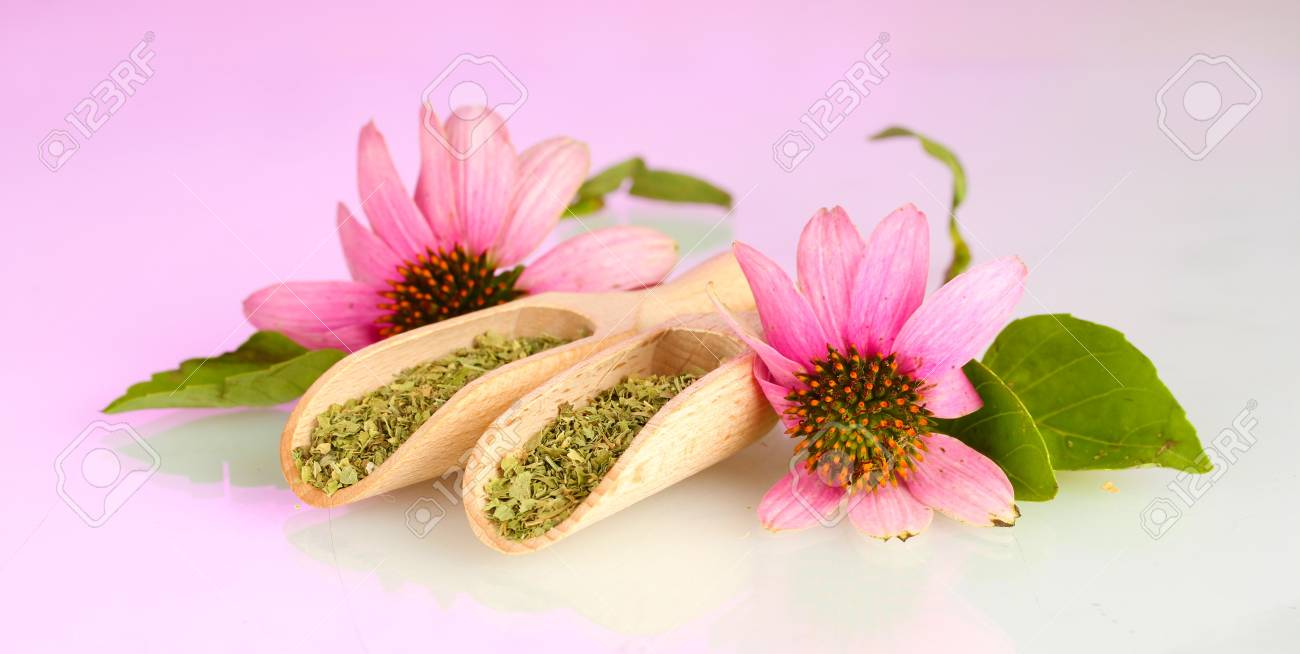 Purple echinacea flowers and dried herbs on pink background Stock Photo - 15547803