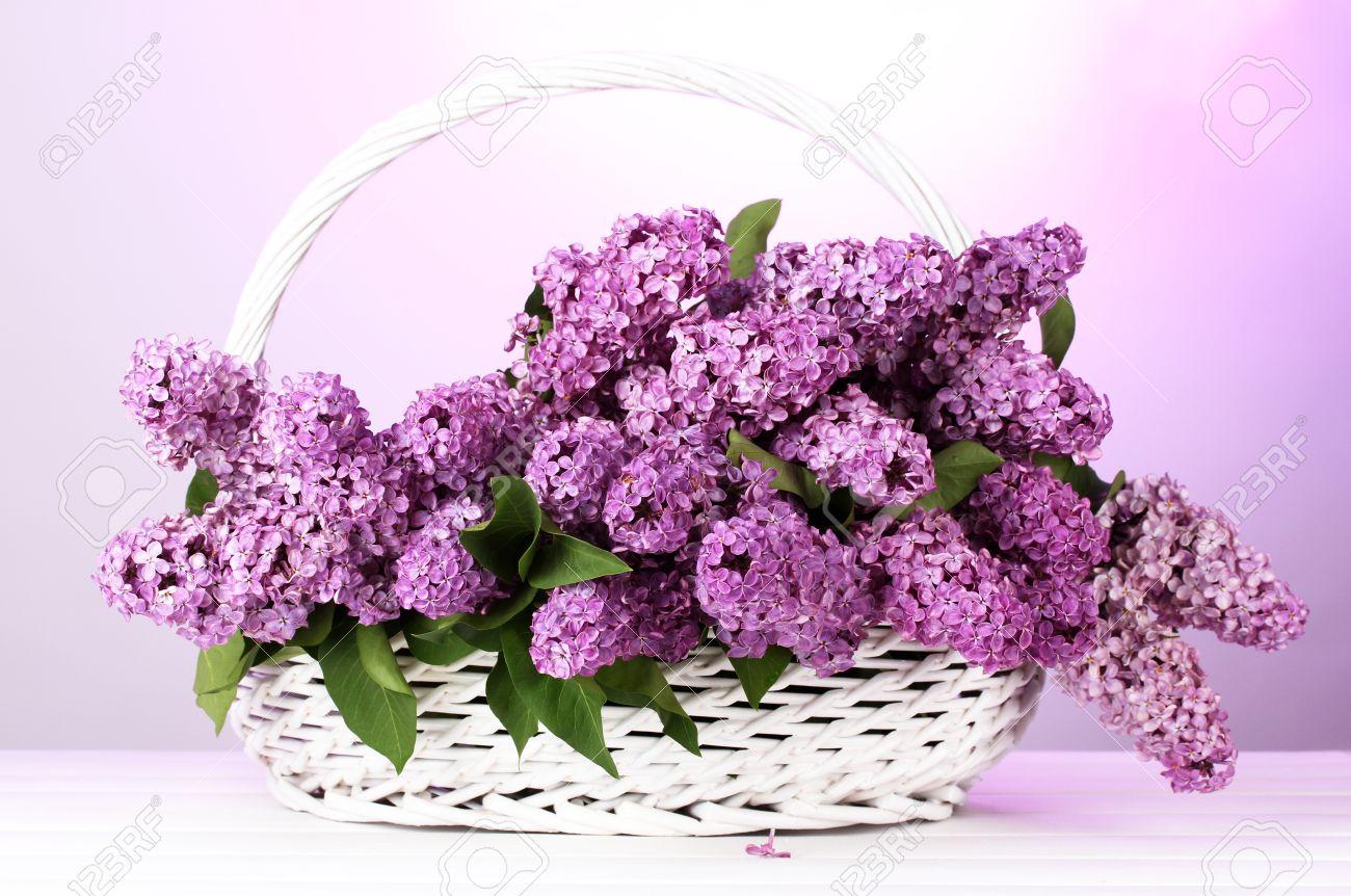 Regala flores al forer@ de arriba                 - Página 2 15658971-hermosas-flores-lilas-en-la-cesta-sobre-fondo-morado-Foto-de-archivo