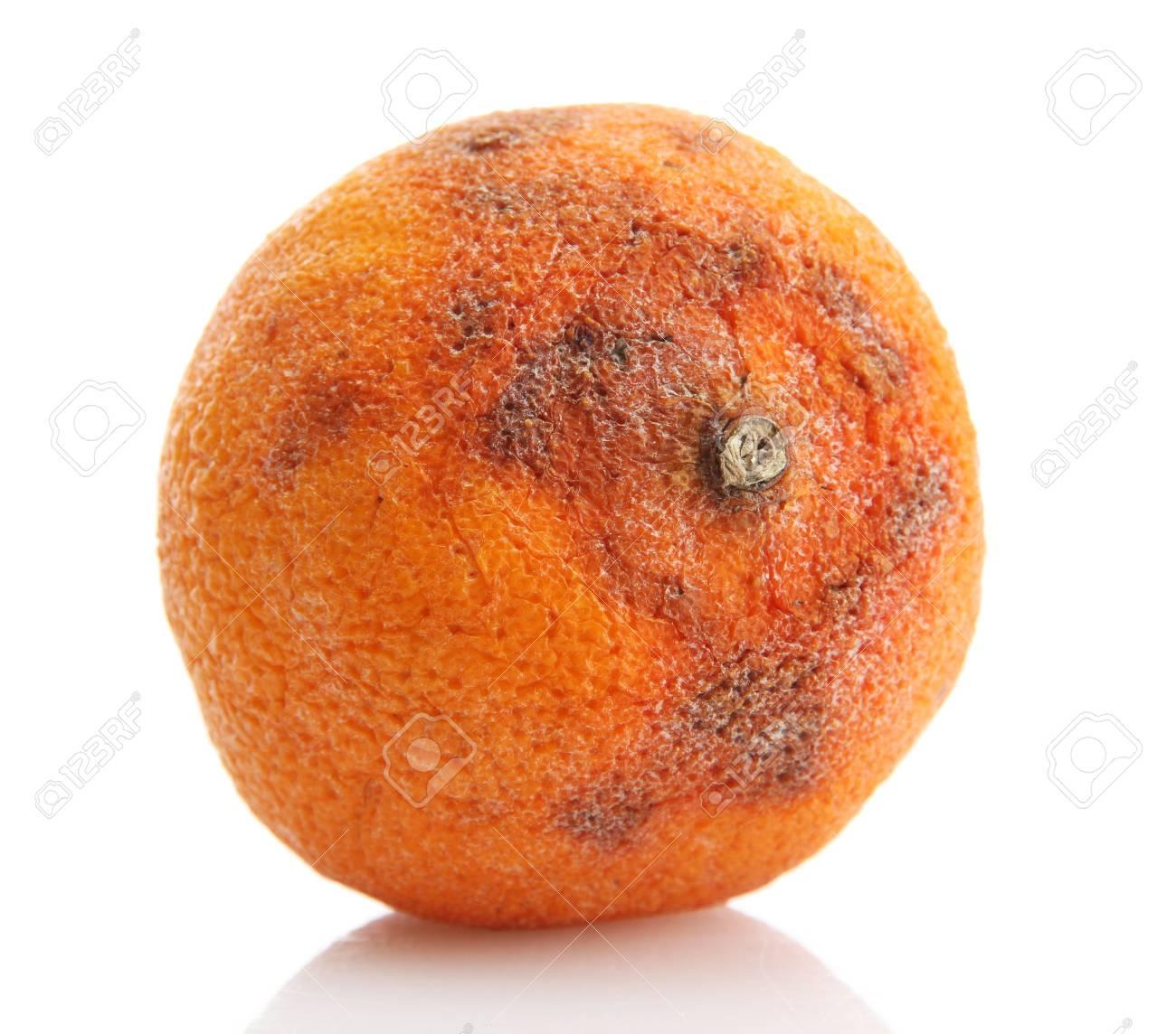 Rotten orange isolated on white Stock Photo - 15643403