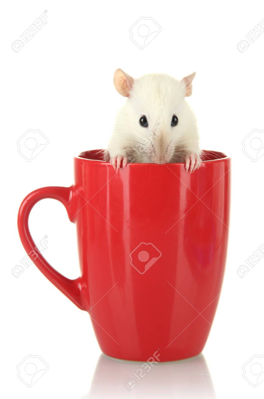 funny little rat in cup, isolated on white Stock Photo - 16667867