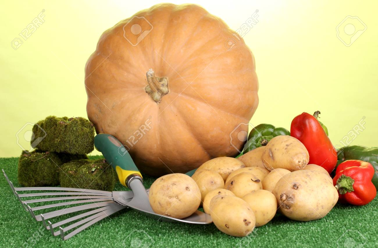 Ripe potatoes with pumpkin and pepper on grass on green background close-up Stock Photo - 16864930