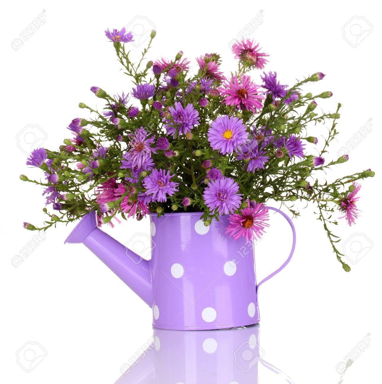 Beautiful bouquet of purple flowers in watering can isolated stock beautiful bouquet of purple flowers in watering can isolated on white stock photo 17053758 izmirmasajfo