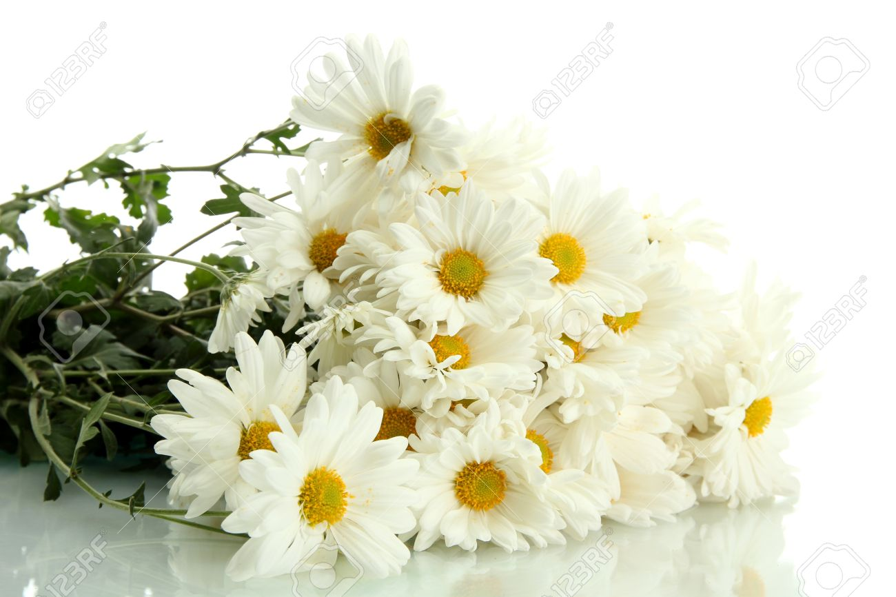 Bouquet Of Beautiful Daisies Flowers, Isolated On White Stock Photo ...