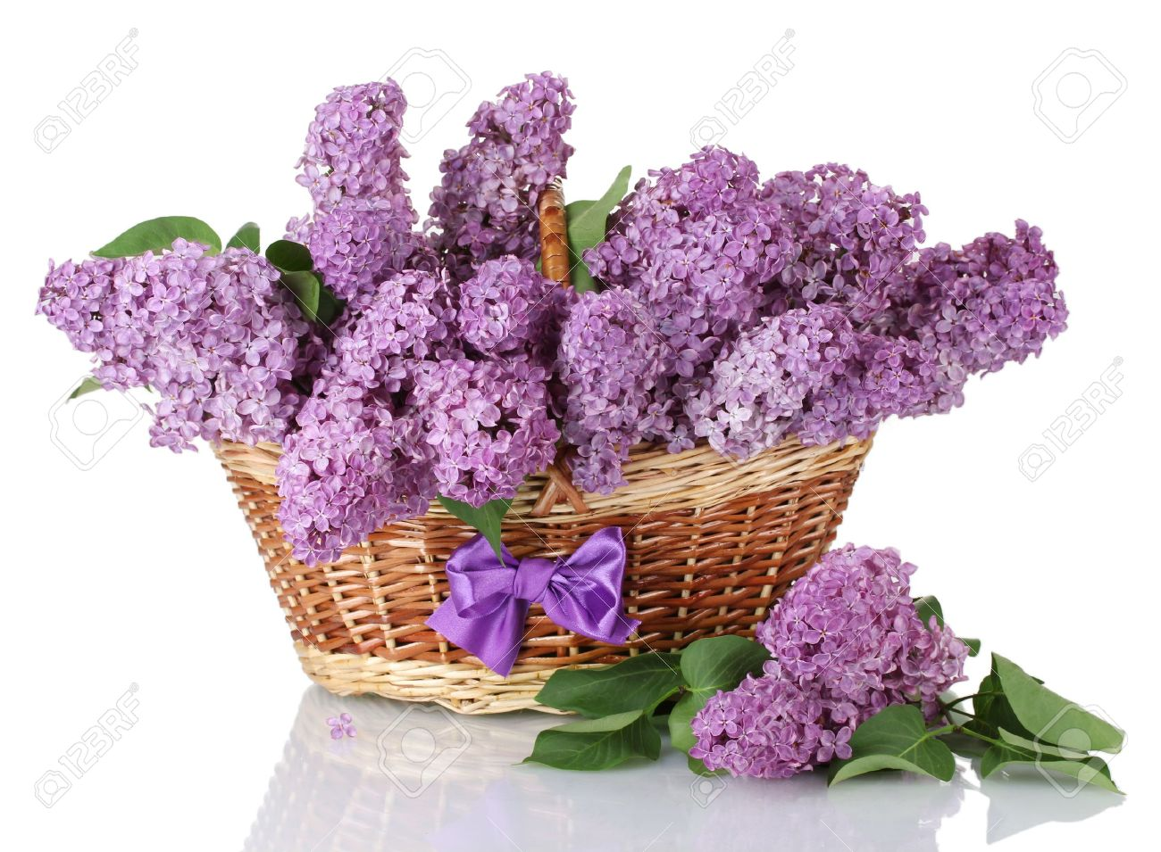 17820772-beautiful-lilac-flowers-in-basket-isolated-on-white-Stock-Photo