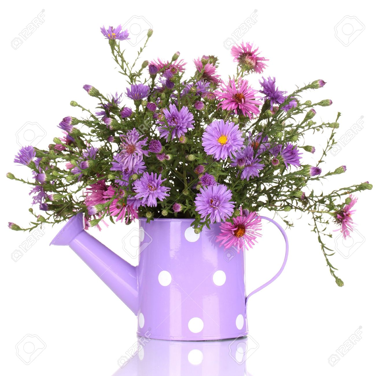 Beautiful Bouquet Of Purple Flowers In Watering Can Isolated.. Stock ...