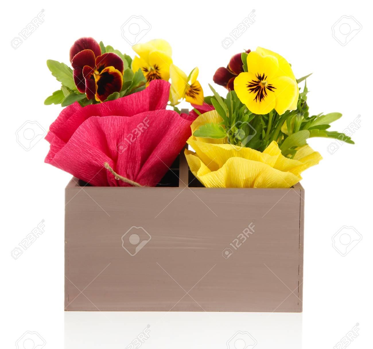 Mooie Houten Box.Mooie Viooltjes Bloemen In Houten Kist Op Wit Wordt Geisoleerd