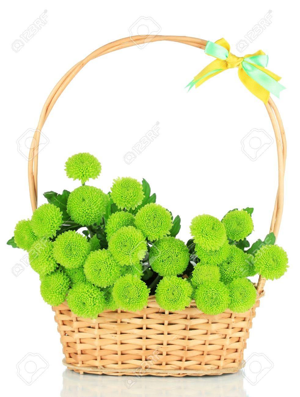 Beautiful green chrysanthemum in wicker basket isolated on white Stock Photo - 21003505
