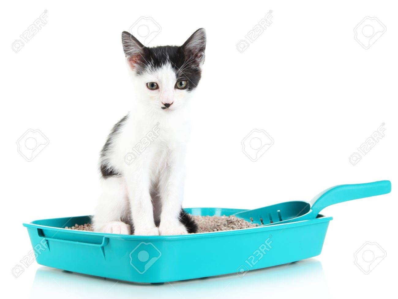 what kind of cat litter is best for rabbits