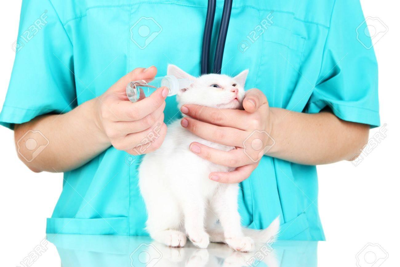Veterinarian examining kitten isolated on white Stock Photo - 21237444