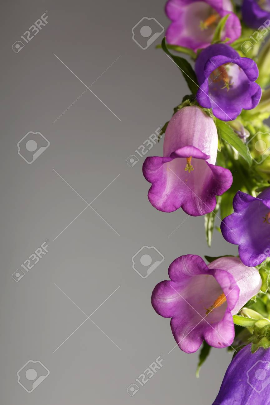 Beautiful Wild Flowers On Grey Background Stock Photo Picture And