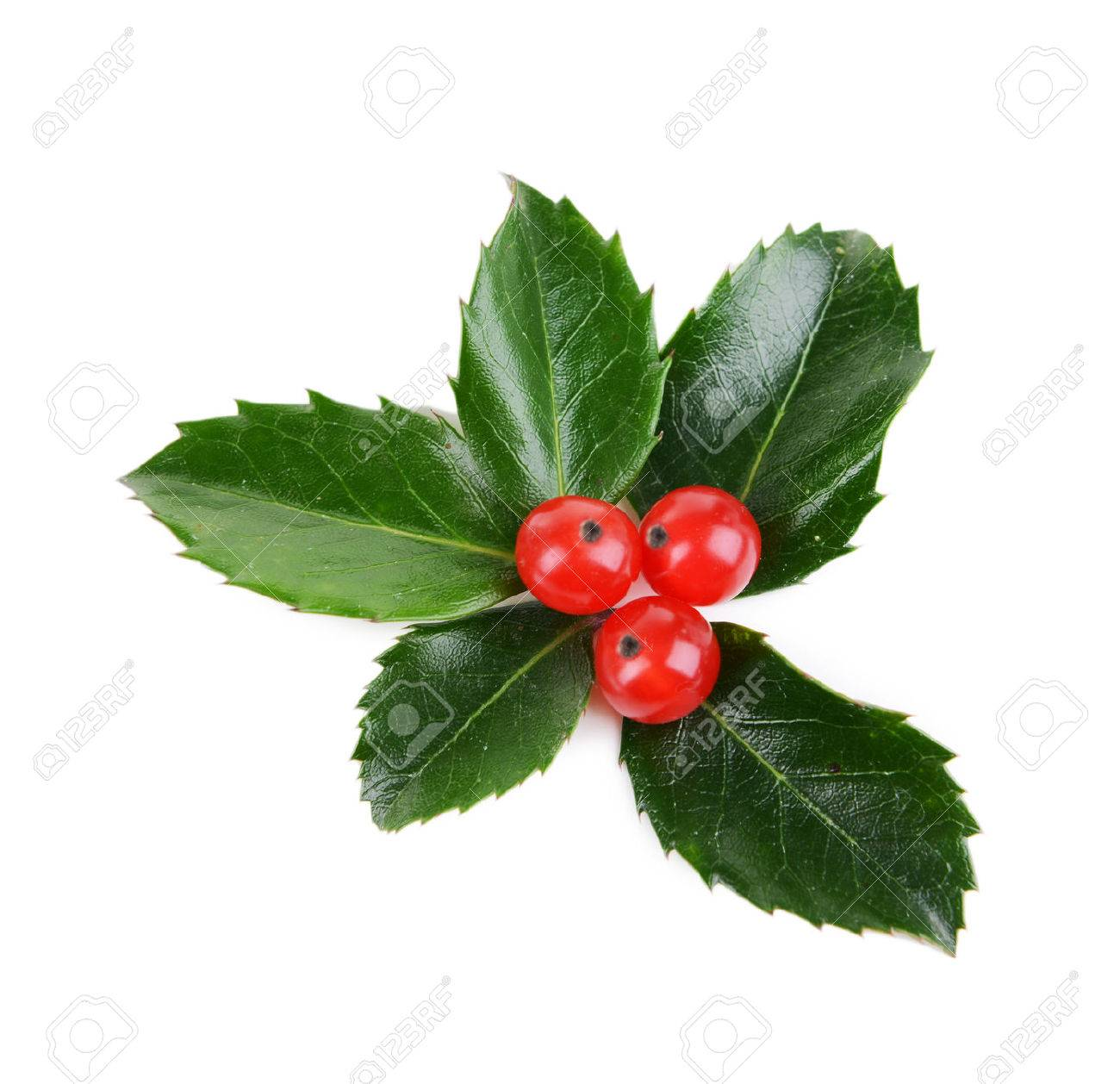 leaves of mistletoe with berries isolated on white stock photo