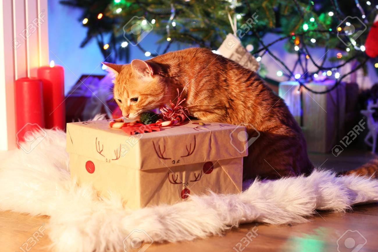 Red cat with Christmas gift Stock Photo - 98972573