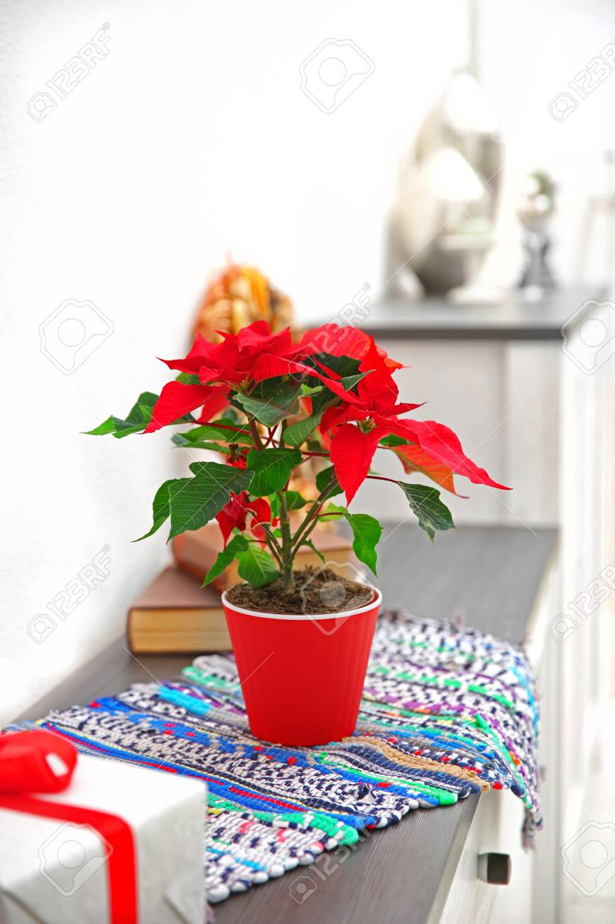 christmas flower poinsettia and decorations on shelf with christmas decorations on light background stock photo