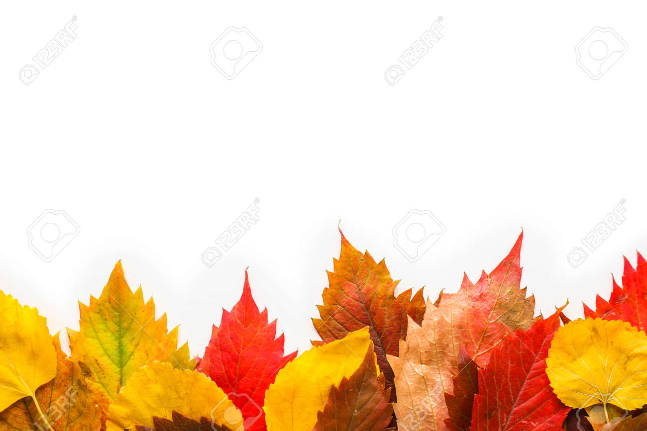 Beautiful autumn leaves on white background - 165955443