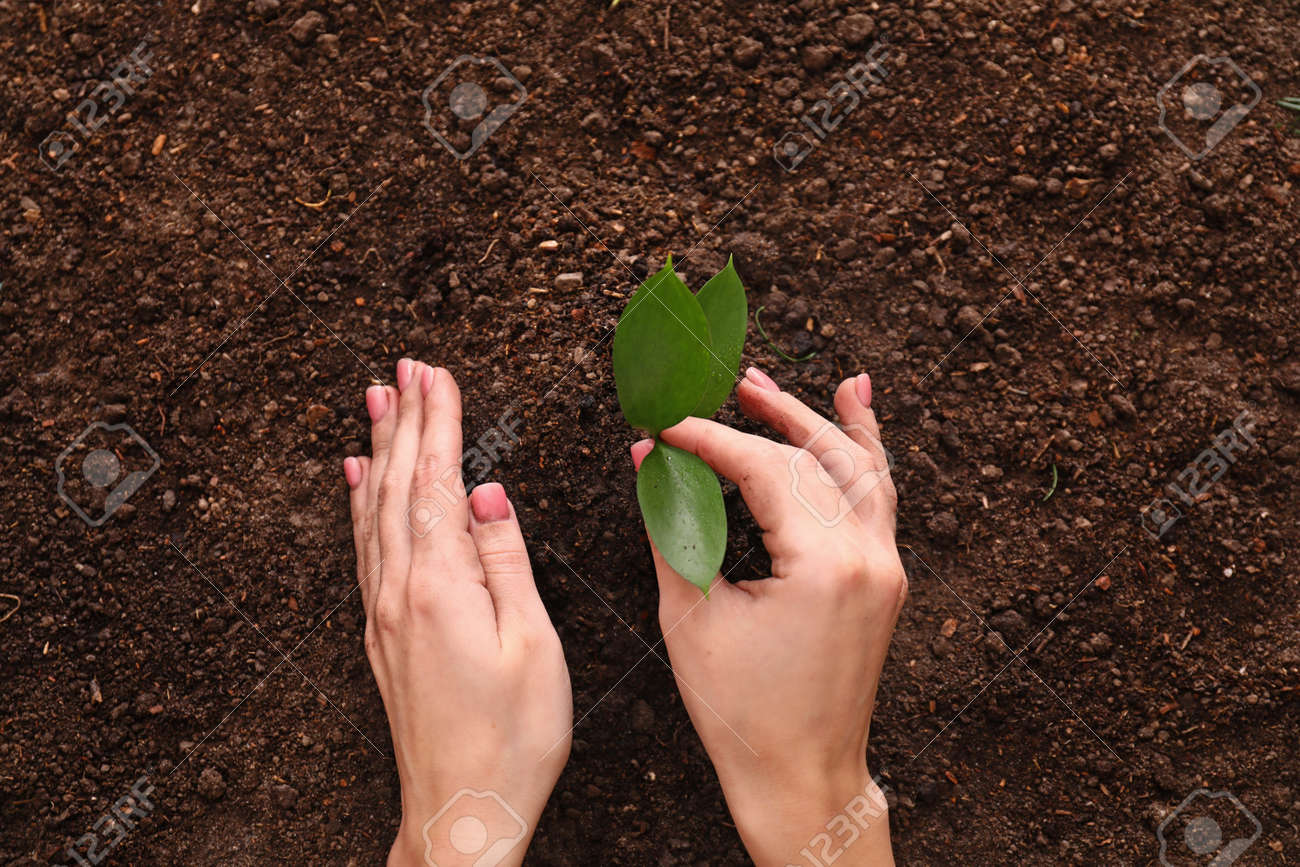 Woman planting green seedling, top view - 165716760
