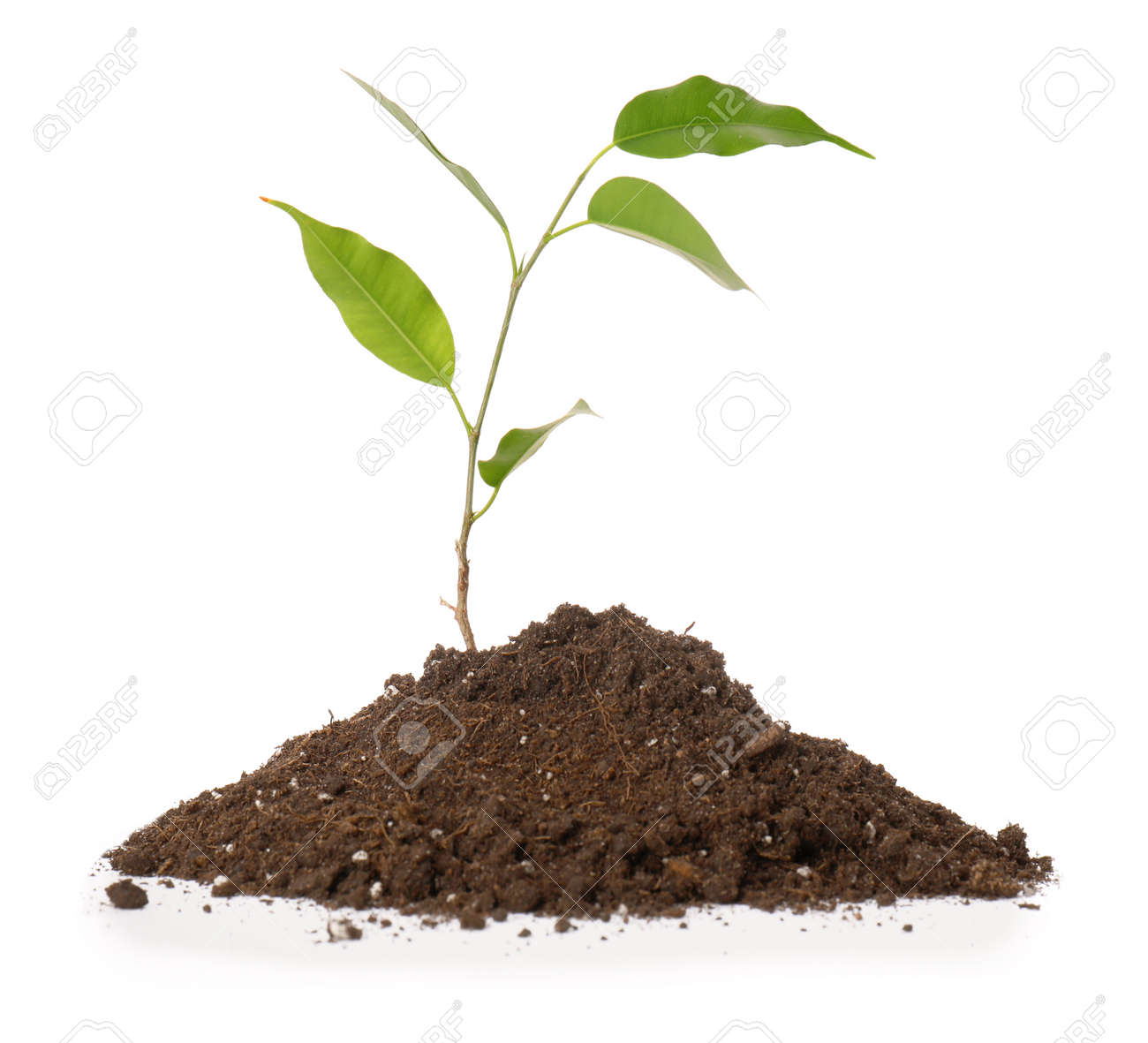 Green plant with heap of soil on white background - 165715961