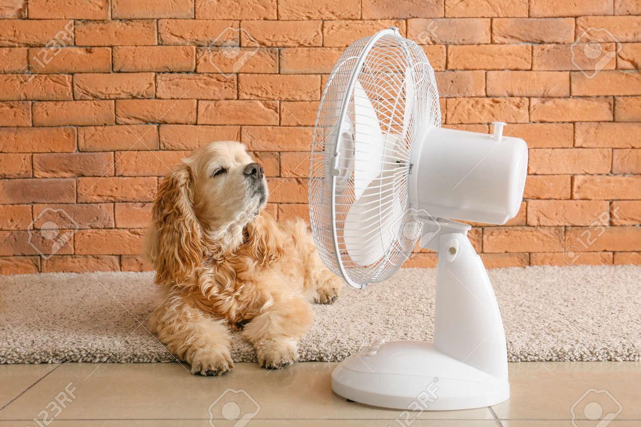 Cute dog and electric fan near brick wall - 166329105